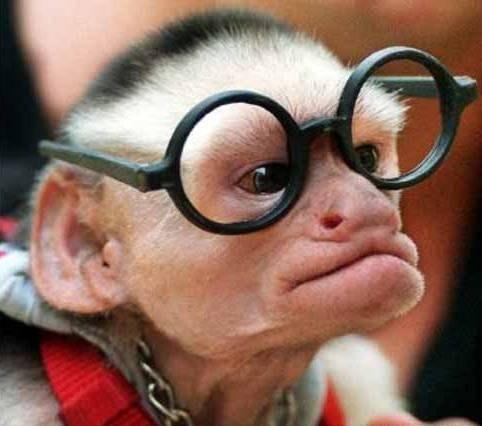 singe-a-lunette